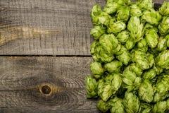 Green hops Stock Photos