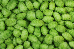 Green hops Royalty Free Stock Photography