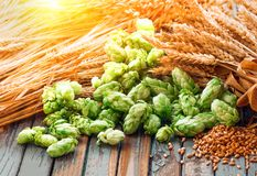Green hops, malt, ears of barley and wheat grain. Ingredients to make beer and bread, agricultural background stock photos