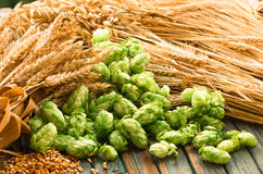 Green hops, malt, ears of barley and wheat grain. Ingredients to make beer and bread, agricultural background Stock Photography