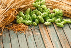 Green hops, malt, ears of barley and wheat grain. Ingredients to make beer and bread, agricultural background Stock Image