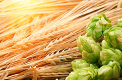Green hops, malt, ears of barley and wheat grain. Ingredients to make beer and bread, agricultural background Stock Images