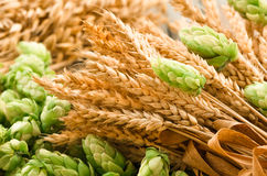 Green hops, malt, ears of barley and wheat grain. Ingredients to make beer and bread, agricultural background Stock Photo