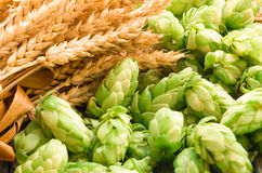 Green hops, malt, ears of barley and wheat grain. Ingredients to make beer and bread, agricultural background Royalty Free Stock Photos
