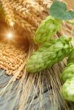Green hops, malt, ears of barley and wheat Stock Photos