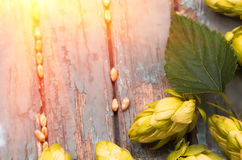 Green hops, malt, on a wooden old table. Green hops, malt, and wheat grain on a wooden old table, ingredients to make beer and bread, agricultural background Royalty Free Stock Photography