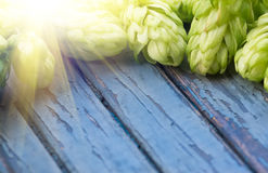 Green hops, malt, on a wooden old table. Green hops, malt, and wheat grain on a wooden old table, ingredients to make beer and bread, agricultural background Stock Photos