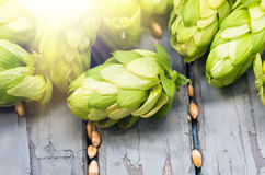 Green hops, malt, on a wooden old table. Green hops, malt, and wheat grain on a wooden old table, ingredients to make beer and bread, agricultural background Royalty Free Stock Image