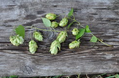 Green Hops and Old Board Stock Photography