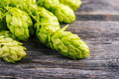 Green hops on  rustic table close up. Royalty Free Stock Photos