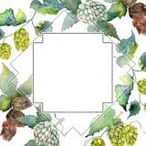Green hops. Watercolor background illustration set. Frame border ornament square. stock images