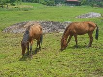 green horse stables royalty free stock image