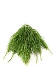 Green horsetail Stock Photography