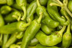 Green hot pepper bunch Royalty Free Stock Photo