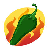 Green hot pepper illustration. Green hot chili pepper drawing; Jalapeno pepper Royalty Free Stock Photography