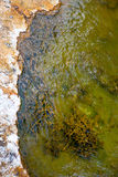Green Hot Spring Royalty Free Stock Photography