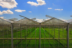 Green house. Glass green house garden production Stock Photography