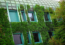 Green house. Detail of modern house with plant on wall Stock Photo