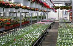 Green House Royalty Free Stock Photos