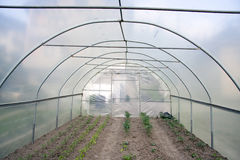 Green house. Organic food in green house Royalty Free Stock Photos