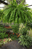 Green House With Ferns Bromeliads, Corn Plant, Palms, and Ivy Royalty Free Stock Images