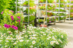 Green house flower shop at garden centre Stock Photo