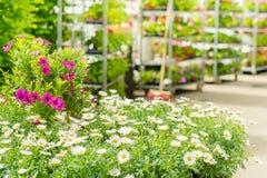 Green house flower shop at garden centre. Green house shop with potted flowers at garden centre Stock Photo