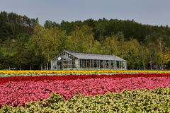 Green house and flowers. Autumn is spent oceans, all kinds of flowers and trees flourish, an open race Royalty Free Stock Images
