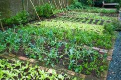 Green house garden Royalty Free Stock Photos