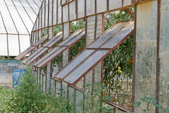 Green House. Half Open Windows of an Industrial Green House Royalty Free Stock Photography