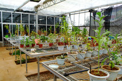Green house interior Royalty Free Stock Images