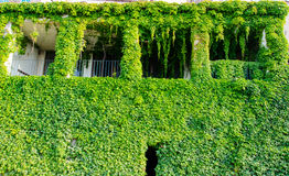 Green house in the leaves. In Corsica Stock Photo