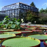 Green House and Lily Pads Royalty Free Stock Photo
