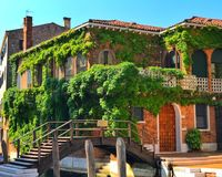 Green house. Local House in Venice , Italy with climbers plant Stock Photography