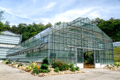 Green House Of Cactus Royalty Free Stock Image