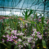Green house orchid flower nursery Stock Images