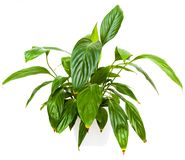 Green House plant Royalty Free Stock Images