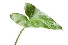Green house plant close up Stock Photo