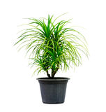 Green house plant isolated on white Stock Photography
