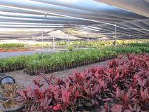 Green house plant production. Greenhouse plant production with shade cloth Stock Images