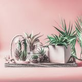 Green house plants arrangement in pots, glass terrarium and jars on table at pastel pink background. Various succulent and cactus. Plants in glass bowls. Modern royalty free stock images