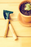 Green house plants in brown clay pots on an old wooden background succulent. Gardening tools. instagram filter Royalty Free Stock Image