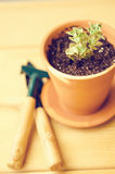 Green house plants in brown clay pots on an old wooden background succulent. Gardening tools. instagram filter Stock Image