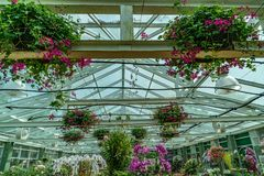 Green house roof. Structure of green house roof with colorful flowers and concrete pathway royalty free stock images
