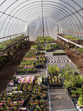 Green house with seedlings in containers Stock Images