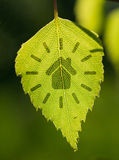 Green house sign with leaf. Abstract illustration with background Royalty Free Illustration