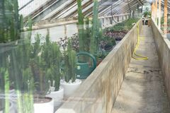 Green house view with cactus succulent Stock Images