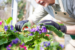 Green house worker Royalty Free Stock Photo