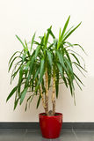 Green houseplant Royalty Free Stock Photos