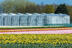 Green houses in a cultivated flower field Stock Photos